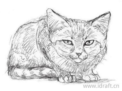 沙漠猫素描图