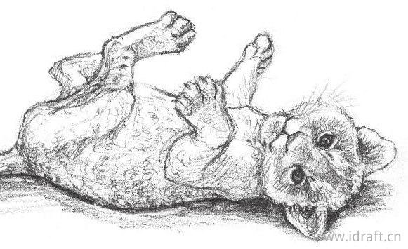 小非洲狮子素描图