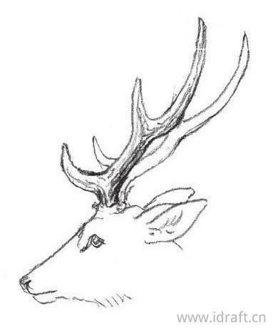 鹿角的素描
