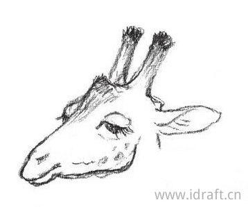 长颈鹿角的素描