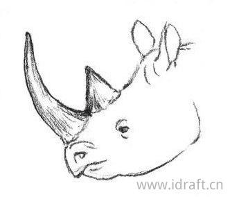 犀牛角的素描