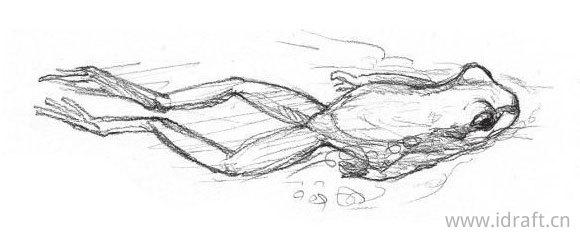 东北雨娃的素描