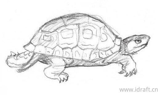 食蛇龟的素描