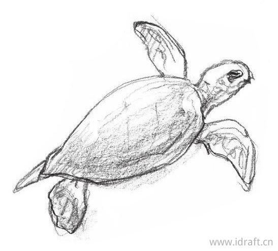 海龟的素描