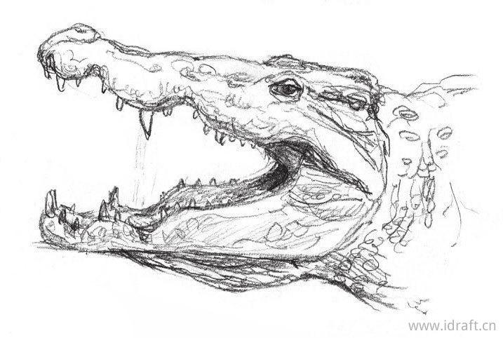 鳄鱼的素描
