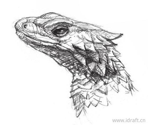 巨型环尾蜥蜴的素描