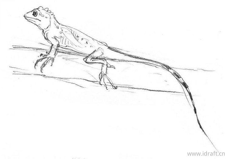 石垣攀蜥蜴的素描