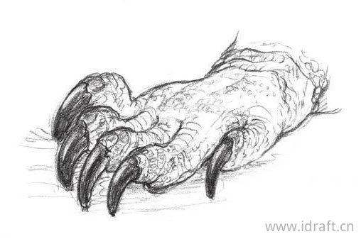 科摩多巨蜥的爪子素描
