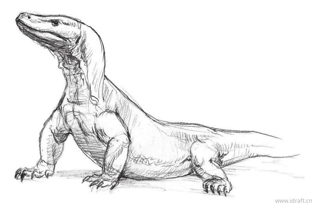 科摩多巨蜥的素描