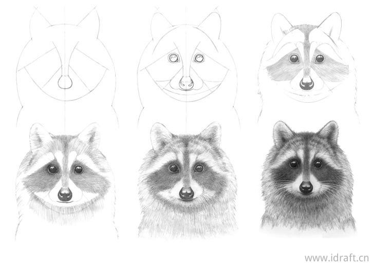 素描浣熊脸的画法步骤