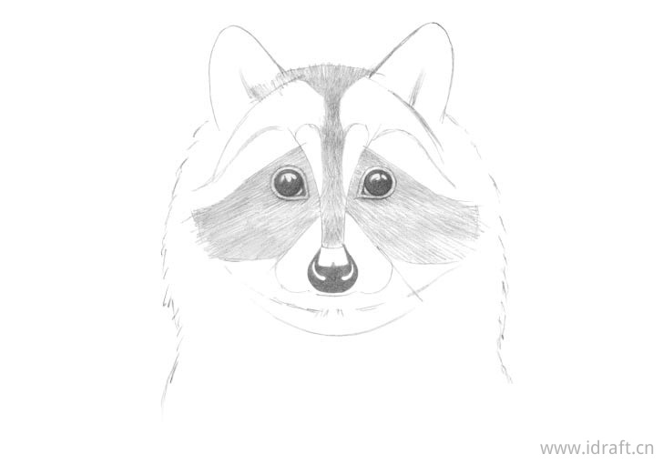 浣熊脸开始着色