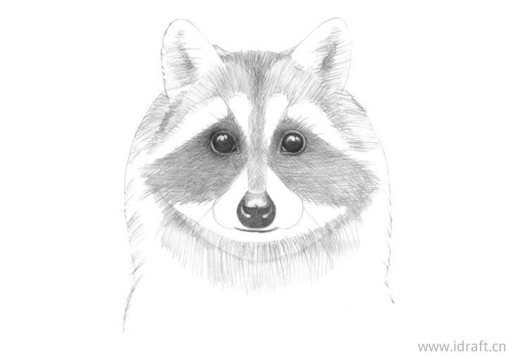 浣熊脸的基本色调