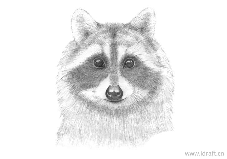 浣熊的脸部阴影