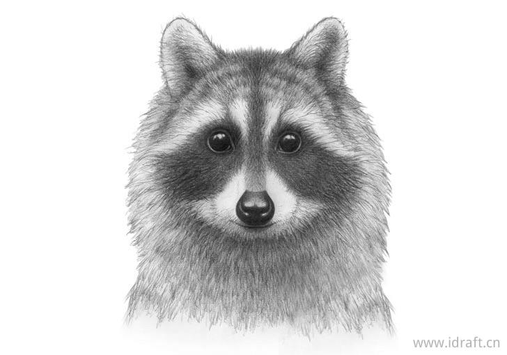 没有胡须的浣熊脸