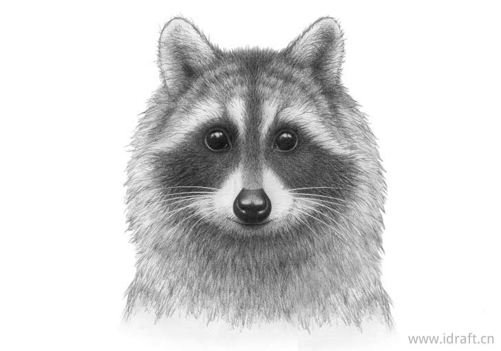 浣熊面孔完成图