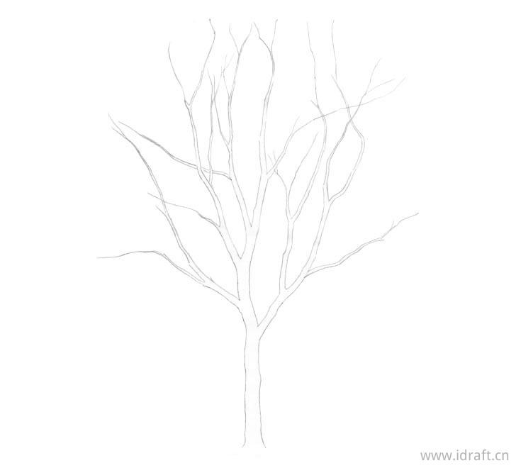 画树干和大树枝条图