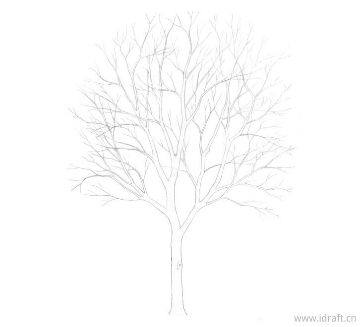 树状线的绘制