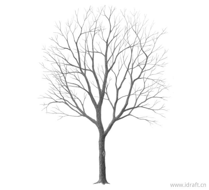 画树的素描图