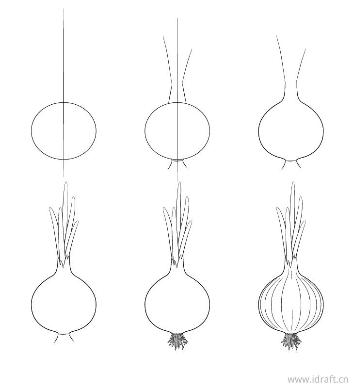 洋葱的画法步骤