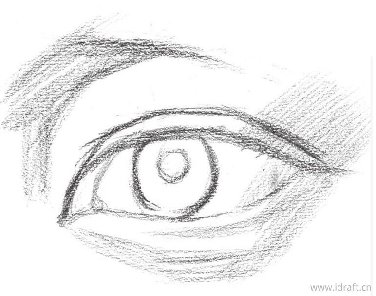 眉毛的形体结构与生长方向