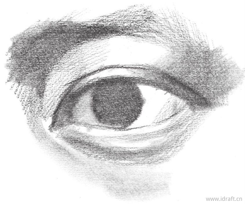 眼睑厚度的刻画