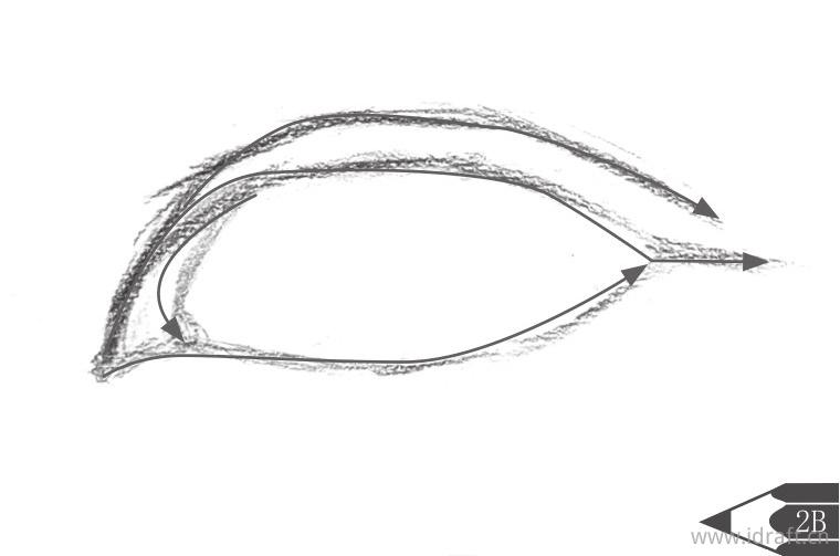 眼睛整体的轮廓