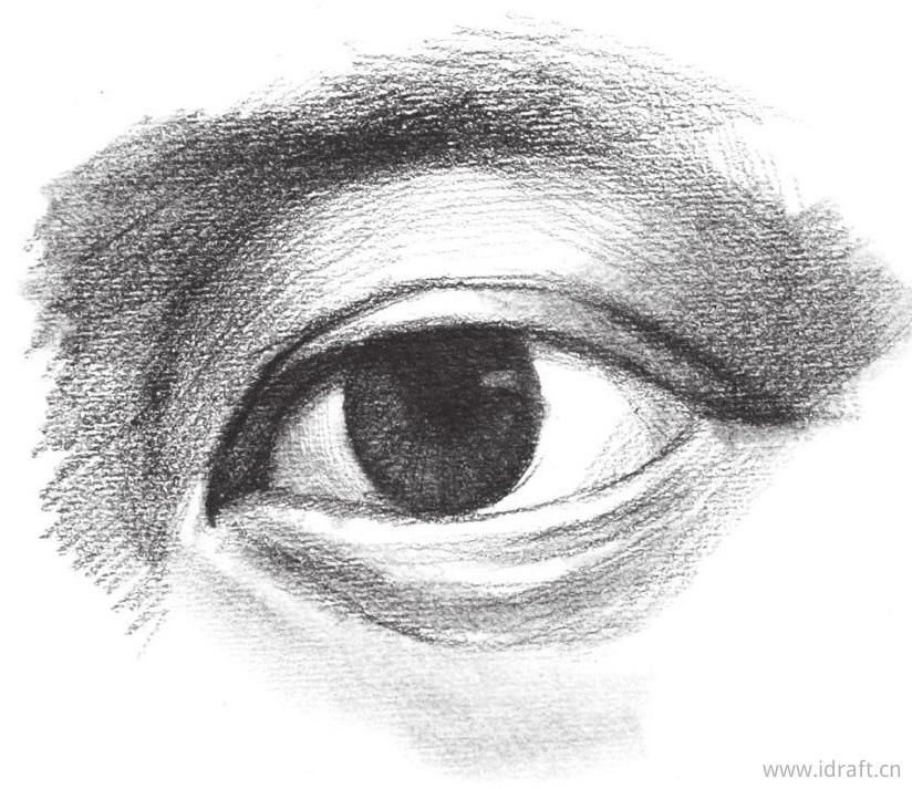 上眼睑的暗部排线