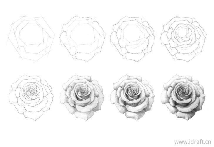 一步一步画玫瑰