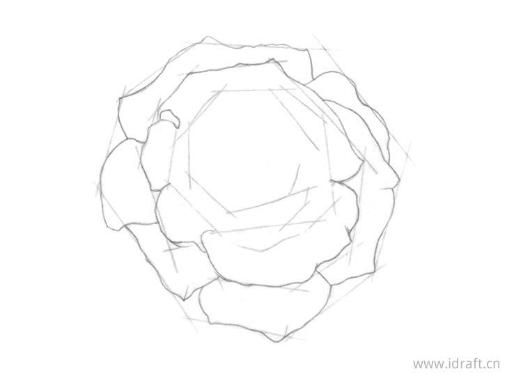 瑰内部花瓣素描图