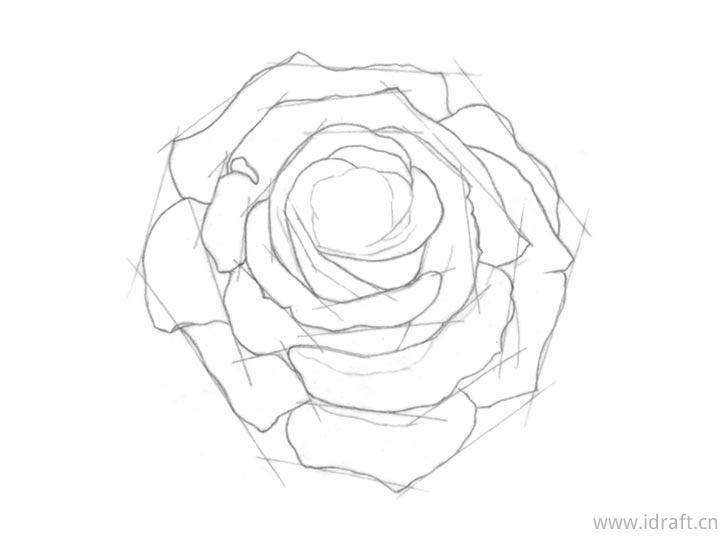 玫瑰核心形状