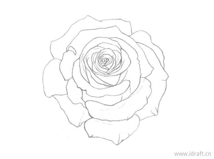 玫瑰轮廓图