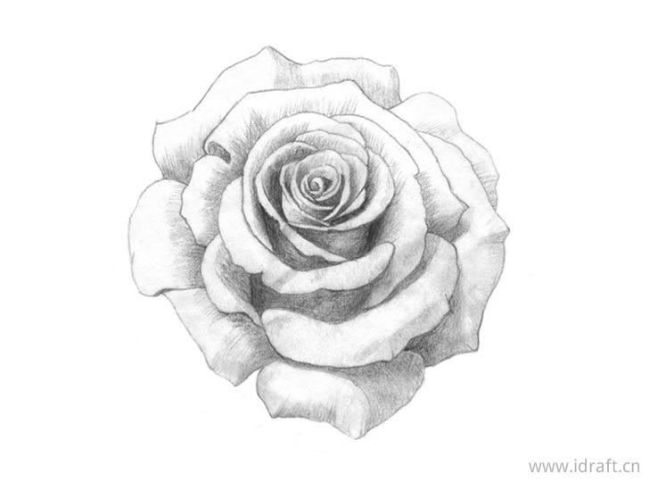 添加玫瑰底纹明暗