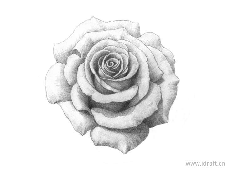 玫瑰素描成品图